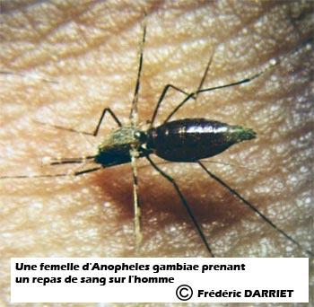 Entretien avec fr d ric darriet des moustiques et des hommes - Frederic le moustique ...
